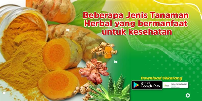 Read more about the article Tanaman Herbal  yang Bermanfaat dan Baik untuk Kesehatan